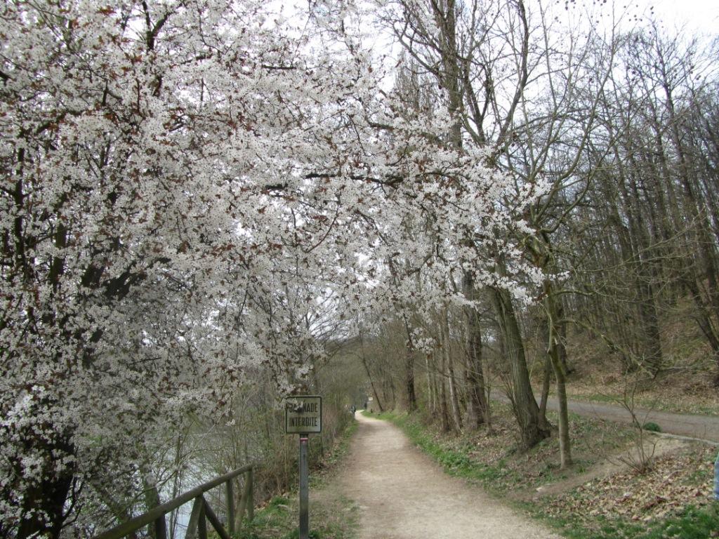 flowery versailles trail