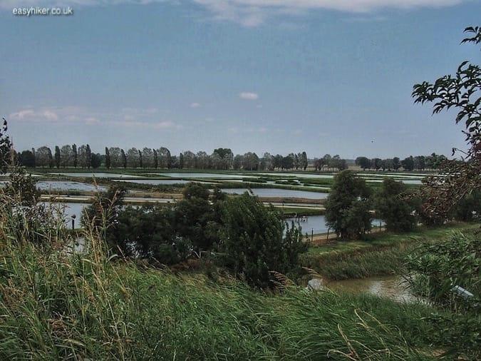 """""""marshes of the Valli di Comacchio"""""""