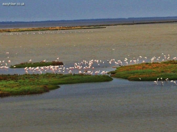 """""""flamingoes in Valli di Comacchio"""""""