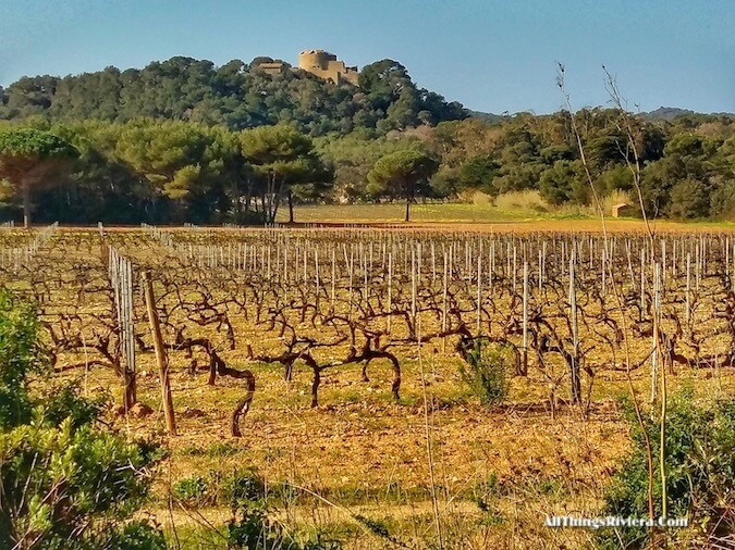 """passing vineyards while hiking or biking in Porquerolles"""