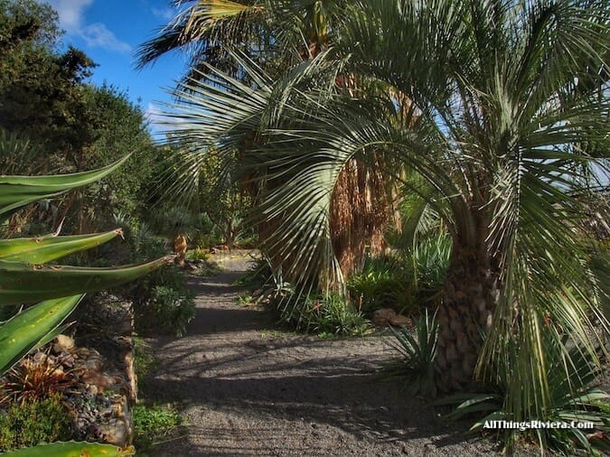"""palm trees in Hyères - Idyllic Garden"""