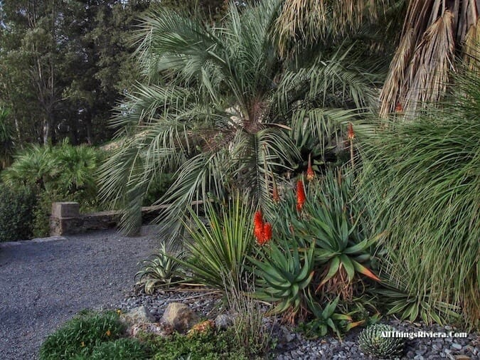 """winter flowering plants in Hyères - Idyllic Garden"""