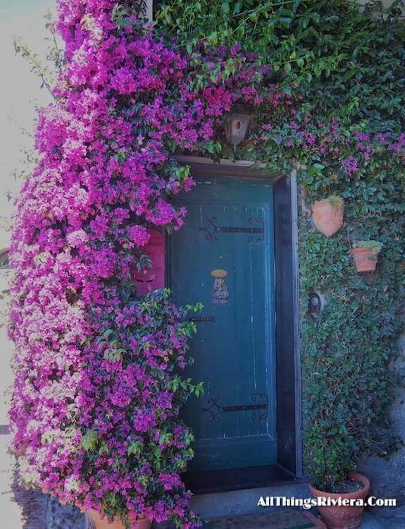"""Bougainvillas - Very First French Riviera Garden Festival"""