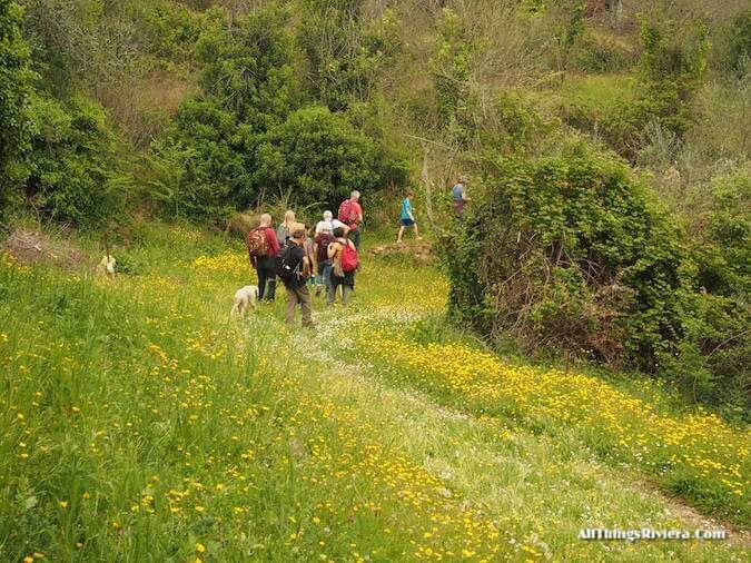 """""""yellow blooms on the trail of a lovely spring hike in Apricale"""""""