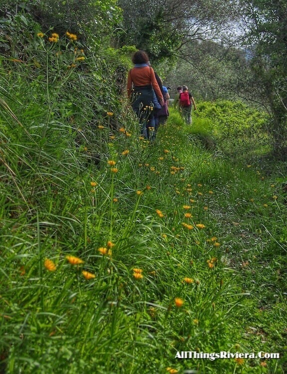 """unmarked trail on a a lovely spring hike in Liguria"""