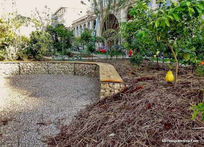 """lemon tree in Menton's garden for the inaugural Festival des Jardins"""