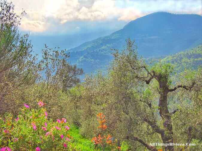 """a lovely spring hike on the Queen of the Hills Apricale"""