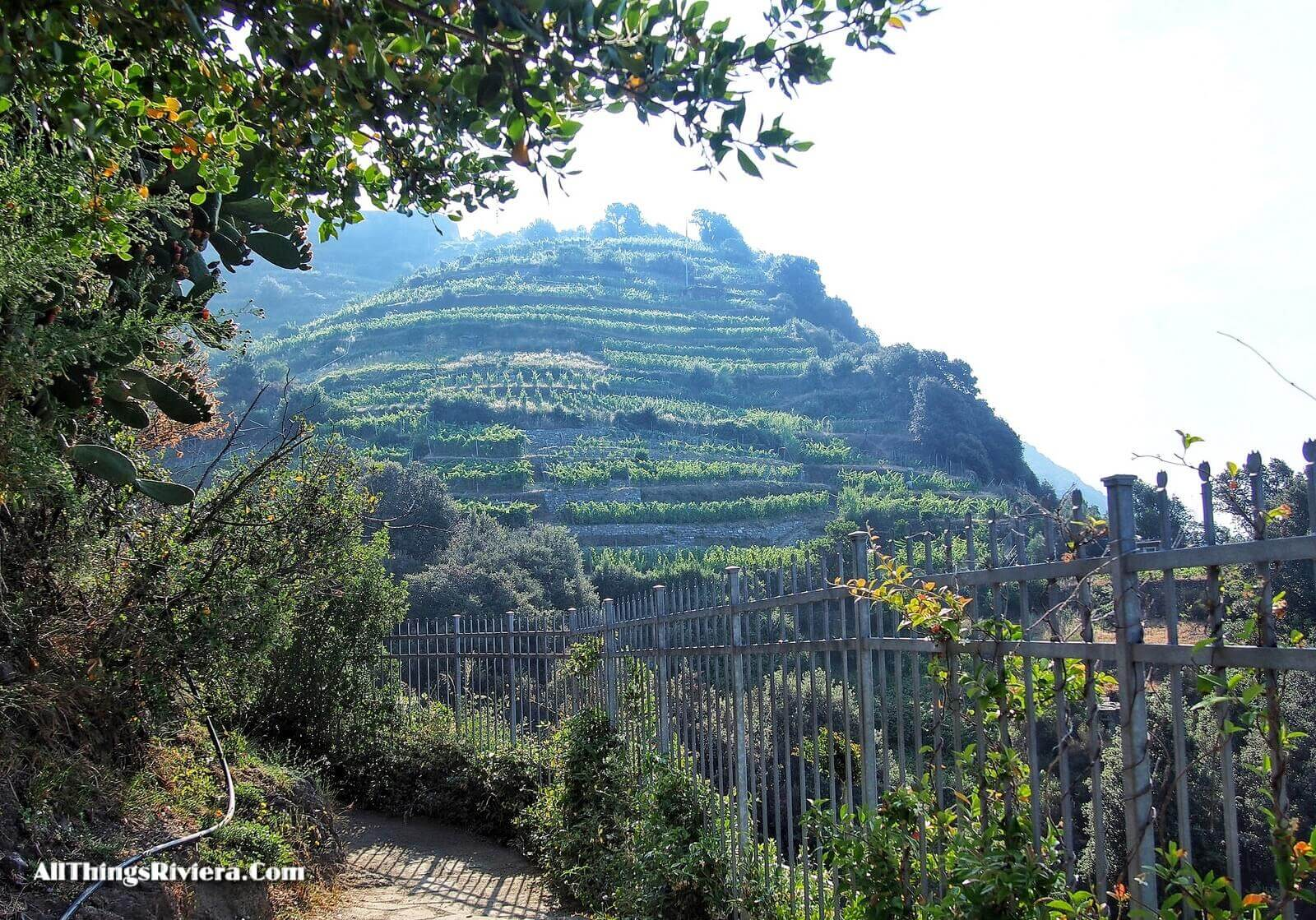 """hillside vineyards - Easy Hiking Experience and More in Cinque Terre"""