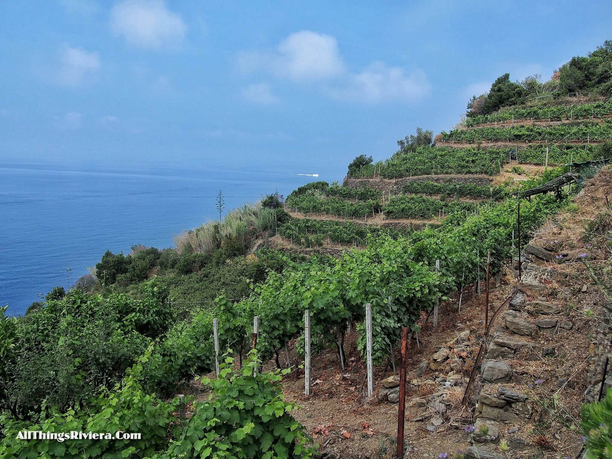 """vineyards and the sea - Easy Hiking Experience and More in Cinque Terre"""