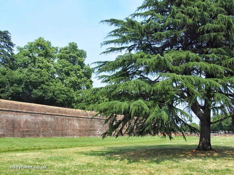 """get out and Walk Along the Lucca Wall"""