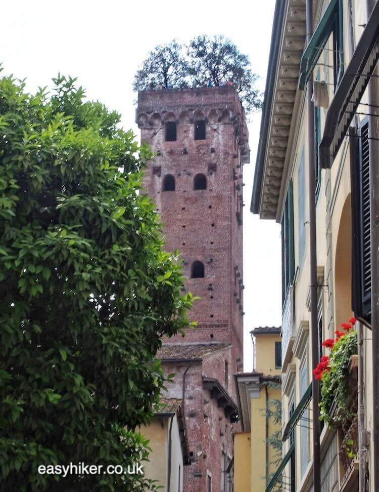 """""""see forest on a rooftop on the Walk Along the Lucca Wall"""""""